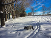 Dog meets Big Snow Cat (lezumbalaberenjena) Tags: snow invierno hiver hielo hiber nieve niege winter cold frio froid bully boston terrier perro dog chien chiot 2017