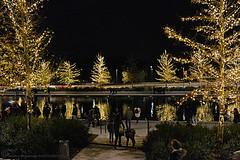 christmas mood (Love me tender ♪¸.•*´¨´¨*•.♪¸.•*´) Tags: dimitrakirgiannaki photography greece greek nikond3100 night light christmas palaiofaliro athens stavosniarhosfoundation reflections people silouettes trees lake nature