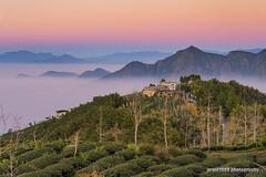 Before night falls. (grant1980:)) Tags: dalunshan sightseeing tea plantation taiwan nantou lugu 台灣 南投 鹿谷 大崙山 大崙山觀光茶園