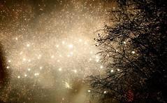 Feuerwerk in Hamburg/Farmsen 5 (_BSnake_) Tags: newyearseve silvester farmsen hamburg hamburgfarmsen hamburgsilvester raketen böller explosionen explosion firework fireworks feuerwerk feuerwerkhamburg neujahr germany deutschland garten langzeitbelichtung newyear neuesjahr