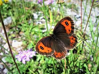 Butterfly 1546