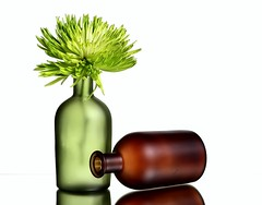 Green & Brown (Karen_Chappell) Tags: green brown white flower floral vase bottle glass two stilllife mum chrysanthemum