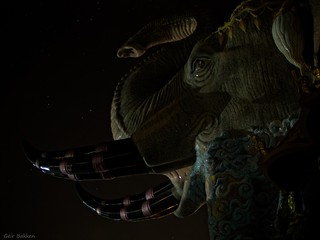 The elephant and the night