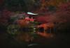 kyototemple (Matt Shiffler Photography) Tags: kyoto kyotojapan temple japanesetemple japan japanese river arashiyama bamboo forest arashiyamabambooforest traveler adventure explore explorer geisha streetphotography autumn fall kyotofall kyotoautumn