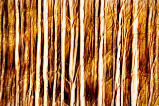 Swipe of a Forest-Abstract 6-0 F LR 11-2-17 J229
