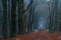 """Veluwe (""""Daniel"""") Tags: veluwe wandering hike trees woods forest bos sigma sd15 foveon"""