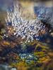 pirate treasure (Andrew C Wallace) Tags: blowhole ocean australia bitcoin gold treasure underwater bokeh lensbaby flinders victoria olympusomdem5 flare