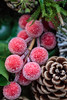 [103/365] (massi2403) Tags: flowerworks garland christmas day103 berries