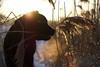 DSC04494 (mikael.kha248) Tags: dog doggy dogs dogwalking activedog walkingdog black blacklabrador blacklab blacklabr labrador labr labradorretriever lab blacklabradorretriever puppy labpuppy winterdog eveningwalk sunspotdog blackdog myblack jim dogas pet pets animal animals wintersolstice sunset sunspot sudown sun sunlight depthoffield landscape nature snow winter december 2017 december17 december2017 winter17 winter2017 alone bokeh selectivefocus ice