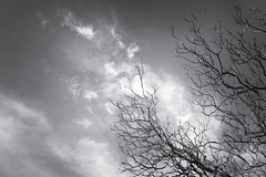 Wildfire (RobertFenyo) Tags: blackandwhite blackwhite tree trees sky clouds fire