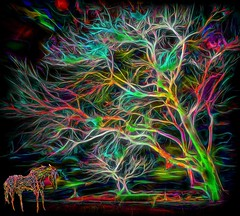 Tree Color (Rusty Russ) Tags: tree color night wire horse lumenescance abstract fun colorful day digital window flickr country bright happy colour eos scenic america world sunset beach water sky red nature blue white green art light sun cloud park landscape summer city yellow people old new photoshop google bing yahoo stumbleupon getty national geographic creative composite manipulation hue pinterest blog twitter comons wiki pixel artistic topaz filter on1 sunshine image