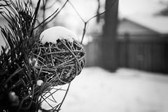 Christmas (mfhiatt) Tags: img91161217 christmas ornament snow 365the2017edition 3652017 day359365 25dec17