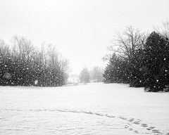 """Winter walk • <a style=""""font-size:0.8em;"""" href=""""http://www.flickr.com/photos/10545530@N06/39390425421/"""" target=""""_blank"""">View on Flickr</a>"""