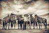 Stand Strong! (MARK RUIZ 08) Tags: cabosanlucas mexico horses mariachi beach vacation riding fun family