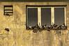 Critics (Prestidigitizer) Tags: buildings vancouver newwestminster columbiatheatre famousplayers mural advertising pigeons moviecritics pentaxk3 sigma18250mmf3563dcmacro historic nostalgic