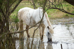 Horse (aaamsss) Tags: nature horese animal animals wild horse naturelover woods catalonia aaamsss