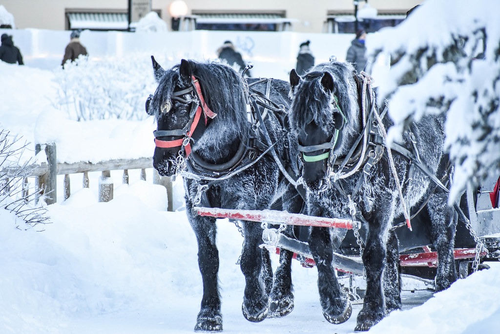 horse drawn sleigh trident2963 tags banff lake louise canada canadian winter snow ice - Christmas Horses