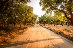 A warm and quiet summer commute (amcatena) Tags: trees leaves landscape tree road sand earth portugal alentejo