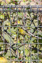 180103 Donosaka Park-12.jpg (Bruce Batten) Tags: reflections locations wild shadows machida plants parks subjects honshu tokyo animals vertebrates birds japan donosaka machidashi tōkyōto jp