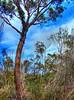 Aussie bush (elphweb) Tags: hdr highdynamicrange nsw australia southcoast coastal
