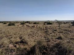2017-12-28 16.34.36 (dcwpugh) Tags: travel nairobi kenya safari nairobinationalpark