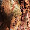 Bark textures (LSydney) Tags: bark peeling texture sydneyredgum angophoracostata angophora
