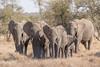 Elephant Family (mayekarulhas) Tags: canon elephant herbivore wildlife wild big 5 southafrica safari krugernationalpark