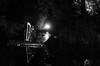 harpist (sixthofdecember) Tags: botanischergarten botanicalgardens botanischenacht nature outside outdoors dark darkness night nightshot nikon nikond5100 nikkor nikkor35mm bw blackandwhite harp people harpplayer harpist black