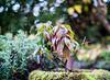 _DSC6183 (xav_roberts) Tags: nikon nikonv1 nikkor dof moss lichen nature funghi rust autumn wintersun moisture dew morningdew outdoor countryside rural plants nikkon1 nikkor32mm nikonft1 sigma105mmf28 sigma105mm sigma