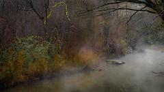 Orange in the Mist (keith_shuley) Tags: mist misty fog foggy creek stream bullcreek austin texas texashillcountry trees