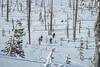 IMG_1773 (tbd513) Tags: newyears idaho snowboarding snowmobiling winter20172018