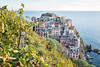 Vineyards and village of Manarola in the Cinque Terre National Park - Liguria - Italy (PascalBo) Tags: nikon d500 europe italia italie italy liguria ligurie laspezia cinqueterre nationalpark parcnational manarola sea mer water vignoble vineyard vigne outdoor outdoors pascalboegli