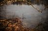 L1000251 (Rene_1985) Tags: leica m 240 rangefinder messucher 50mm 095 asph noctilux reflektion see lake outdoor drausen winter colors farben wasser water