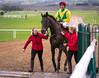 Sizing John (Florian Christoph) Tags: horse racing ireland punchestown racecourse kildare sizing john durkan chase memorial robbie power jessica harrington hri