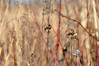 autumn's end (christiaan_25) Tags: autumn season change transition winter grasses wildflowers prairie tallgrass meadow dried brown earthtone red stems nature