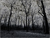 enchanted forest (FotoTrenz NRW) Tags: forest enchanted white black trees winter december bw blackwhite monochrome abstraction