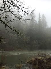 Ice fog (mademoisellelapiquante) Tags: tualatinriver oregon pacificnorthwest icefog nature river winter