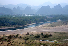 Lijiang River 灕江 (MelindaChan ^..^) Tags: guilin china 桂林 cows life chanmelmel mel melinda melindachan tallowtrees 烏桕灘 烏桕 tree plant beach 灕江 river lijiang