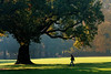 A Morning Walk (Lord Markus) Tags: trees alberi shadows ombre shadow autunno autumn fall 2016 monza parco park parcodimonza colors leaves foglie persone people path woods bosco nikon d300s 85mm 14 samyang man lone morning mattina light luce