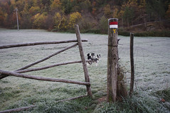 Badia Prataglia (LLauraNLS) Tags: trekking hiking sentierodelleforestesacre forestecasentinesi forest foliage foresta dogtrekking appennino landscape paesaggi wood toscana tuscany mountains montagne nature italia italy dogs dog