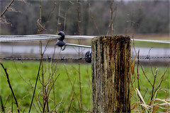 barbed wire........... (atsjebosma) Tags: barbedwire landscape water wood stroming atsjebosma lieveren drenthe thenetherlands nederland hff happyfencefriday january 2018 winter prikkeldraad schrikdraad coth5