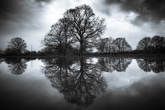 Solitude (MartinFechtner-Photography) Tags: solitude flood flooded meadow river vachte reflection reflektion wasser grafschaft bentheim nordhorn bäume baum mirror water wiese winter hochwasser schwarz weis black white sony a7rii mark2 resolution canon1740mmf4 l