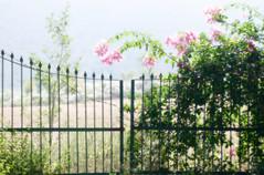 Another World Is Possible (TablinumCarlson) Tags: indien india asien asia rajasthan jaipur जयपुर jayapur gate tor door zaun fence weichzeichner softfocus soft weich blume pflanze flower plant leica dlux2 dlux anotherworldispossible anotherworld gateway alwardistrict alwar blüte rosa pink