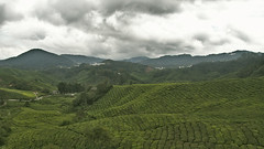 Hills of tea (hasor) Tags: tea hill plantage cameron highlands malaysia green view scenery