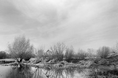 November frosts in the maze of oxbow lakes (Other dreams) Tags: autumn 2017 frost november bratwin pomerania poland vistulavalley vistulalandscapepark overcast willows trees water oxbowlake drygrass highwater tranquility serenity bw film analogue traditionalphotography 50mm normallens