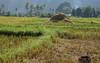 DSC01047 (Dirk Rosseel) Tags: vangvieng laos mekong rice fiels paddy karst mountains ngc