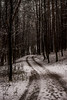 A Road to the Forest (modestmoze) Tags: forest road lines day grey white black brown 2017 500px december winter snow cold lithuania vilnius hill branches leadinglines outside outdoors explore view beautiful hike nature naturephotograph naturelove trees grass many tall high