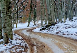 Canfaito - la strada nel bosco