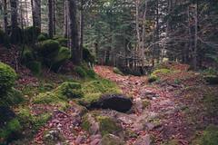 IMG_6655.jpg (Aildrien) Tags: gree autumn musgo selva canon paraiso huesca rocas pirineos trees eos stone aragon arboles musk forest 1740 5d naturaleza otoño oza pyrenees parquenatural verde