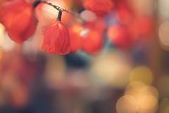 chinatown (christian mu) Tags: weihnachtsmarkt christmas münster muenster germany depthoffield dof bokeh 85mm 8514gm 8514 gm gmaster sonya7ii sony christianmu winter
